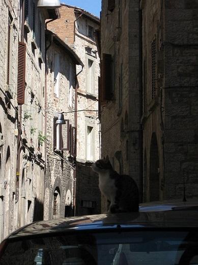 Foto Flickr - uso commerciale consentito - proprietà di 'Ho visto Nina volare'