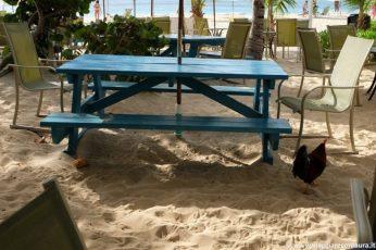 anguilla caraibi prezzi