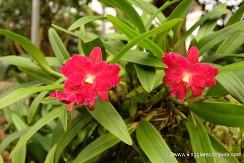 lana cosa vedere orchideen welt