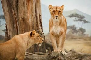leoni
