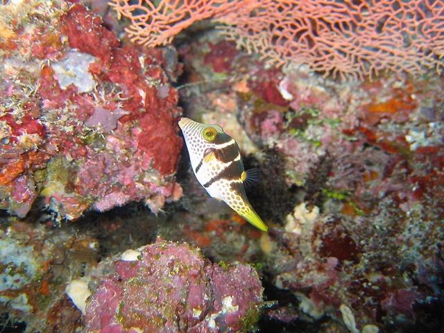 Nabucco Island Indonesia