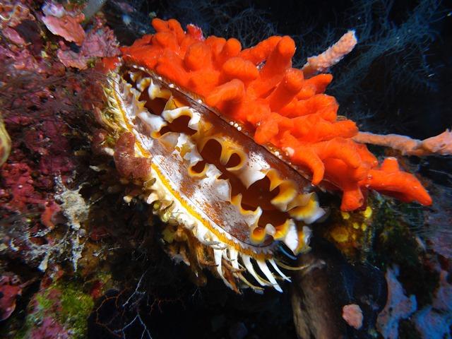 Walea Island Indonesia