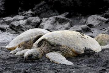 Hawaii Island - Punalu'U Beach Park