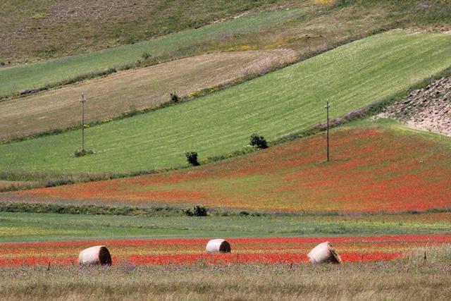 fioritura dell'altopiano di Castelluccio di Norcia