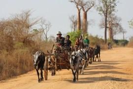 viaggi isola Madagascar cosa vedere parchi e tribù