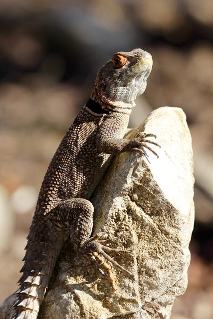 Madagascar Tsingy parchi