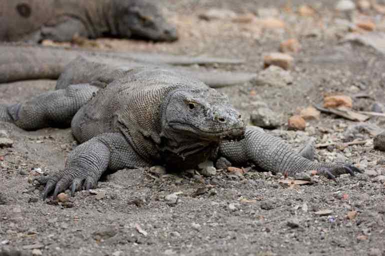 Parco Nazionale di Komodo