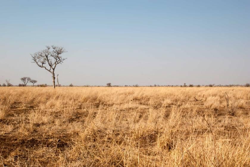 safari-low-cost-savana-kruger