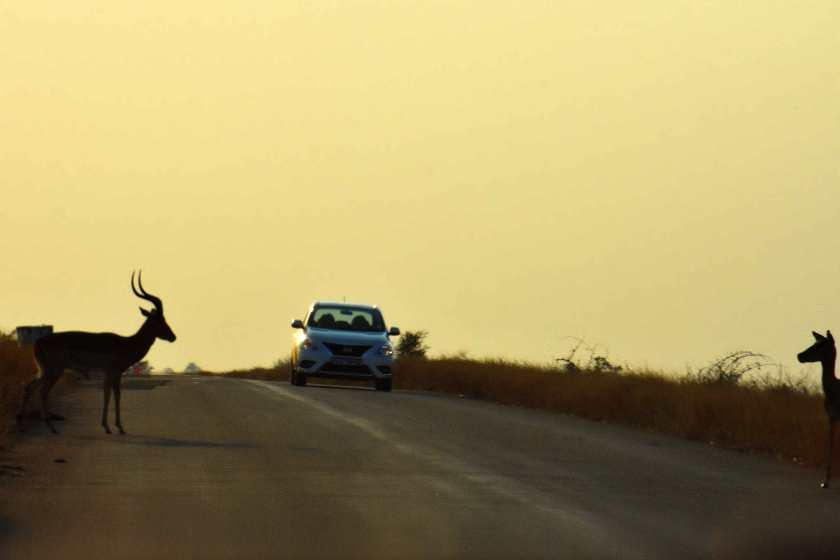 safari-self-drive-fai-da-te