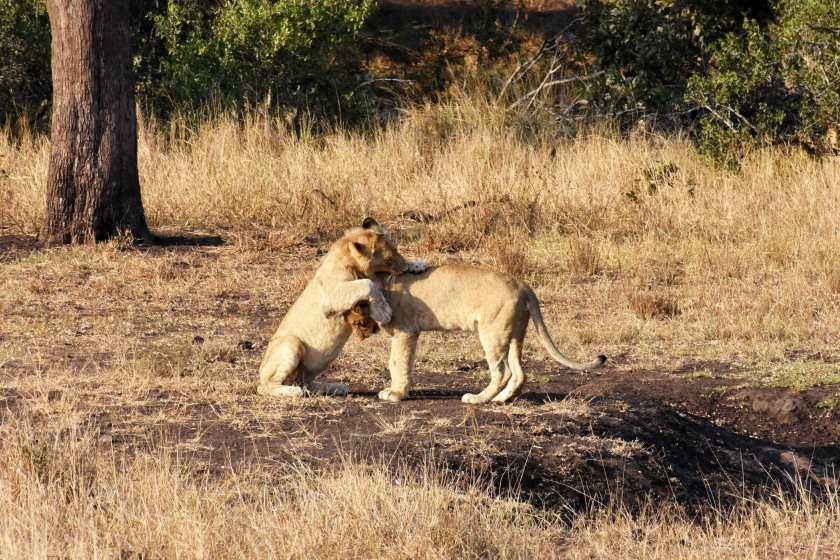 sudafrica-leoni