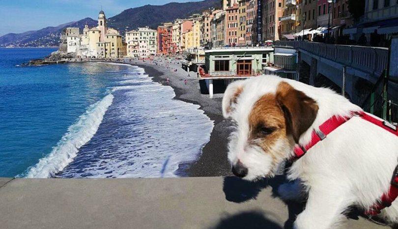 Viaggiare con il cane. Miniguida per tutte le situazioni
