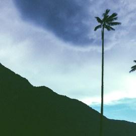 Palma Colombia