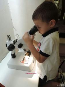Bergamo con bambini: Museo Civico di Scienze Naturali Enrico Caffi