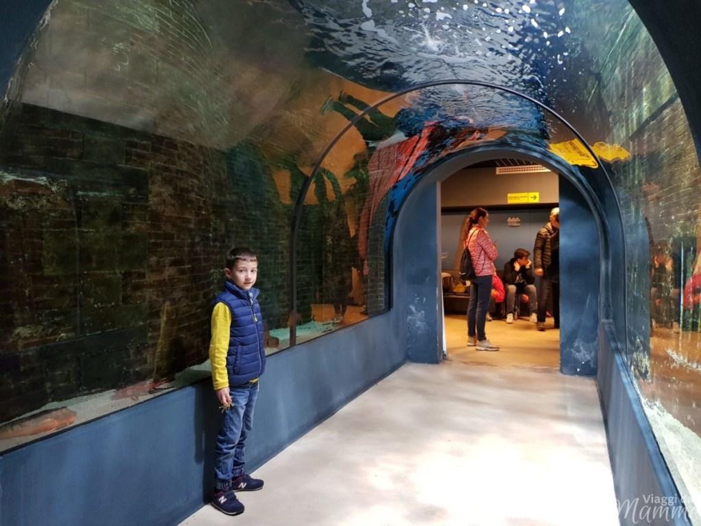 Acquario di Livorno le novità: animali, attività e prezzi - il tunnel