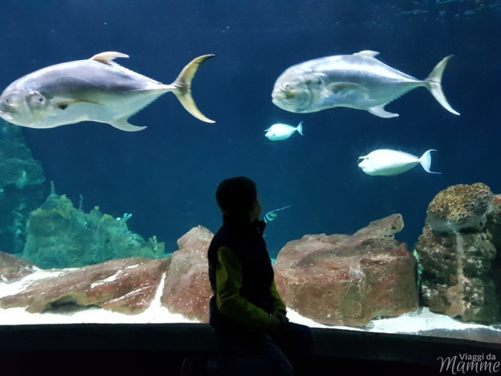 Acquario di Livorno le novità: animali, attività e prezzi - vasca Indopacifico