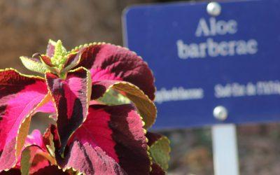 Il Giardino Esotico di Monaco, bellissima scoperta