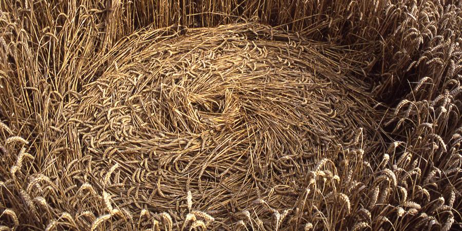 I Crop Circles e l'enigma della loro origine