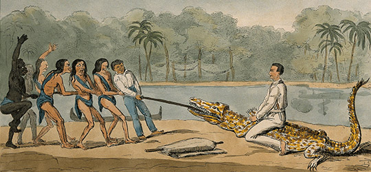 Charles Waterton - Cattura di un Coccodrillo