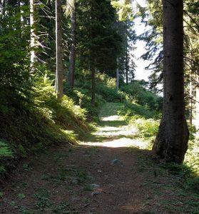 folgarida-estate-sentieri-trekking-escursionistici
