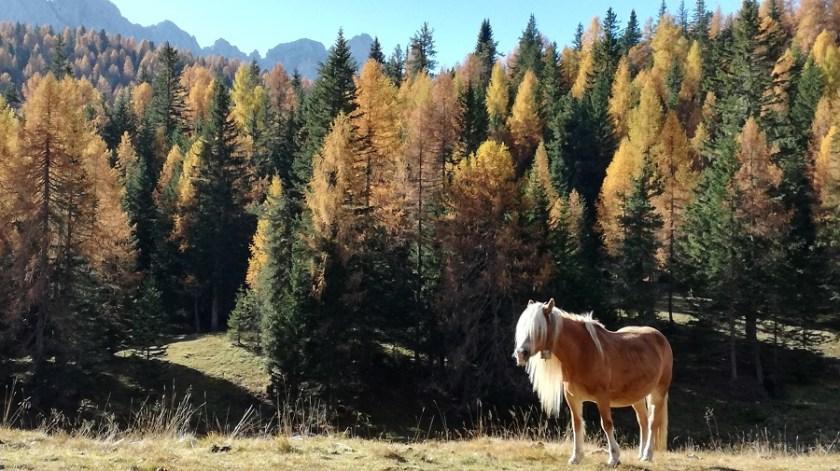la magia del cadore in autunno