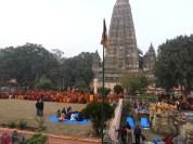 2020 Buddha trai305 lav