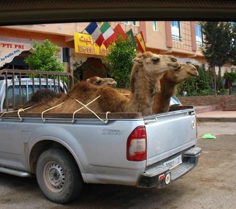 Voglia di Marocco? Non andare senza qualche consiglio