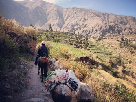 Cañon del Colca en Peru_Oasis de Sangalle. Sonsoles Lozano