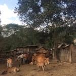 La vida rural está enmarcada por la ganadería y la agricultura
