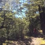 Al ingresar al parque el terreno cambia y cruzamos un hermoso bosque