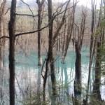 Comenzamos a ver algunas zonas inundadas con árboles muertos