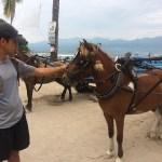 Obviamente nosotros no usamos las carretillas. En general los caballos se ven bien cuidados aunque el calor es excesivo.