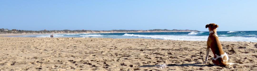 Playa de Tofo en Mozambique