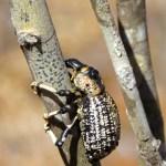 Reniala Madagascar