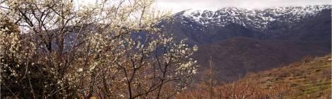 Valle del Jerte, Jerte, Cerezo en flor, Primavera en Jerte, rutas, escapadas, pueblos con encanto, rutas, senderismo