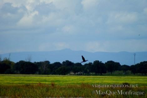 Un ave alzándose al vuelo en el parque ornitológico de Arrocampo, Parque Nacional de Monfragüe y la Reserva de la Biosfera de Monfragüe, Extremadura