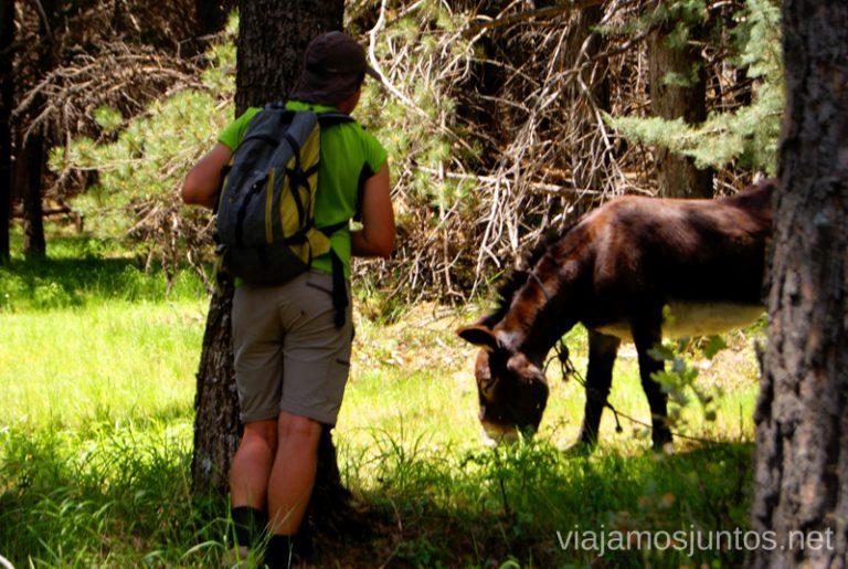 El ¿La? burro del refugio Giner Parque de la Cuenca Alta del Manzanares y Manzanares el Real, Madrid