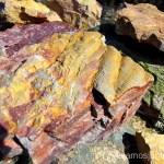 Fósiles Descubriendo el Edén de la Mancha, el parque natural del Valle de Alcudia y Sierra Madrona