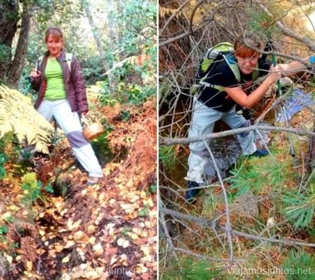 Más ejercicio Los beneficios para la salud de recoger setas, otoño