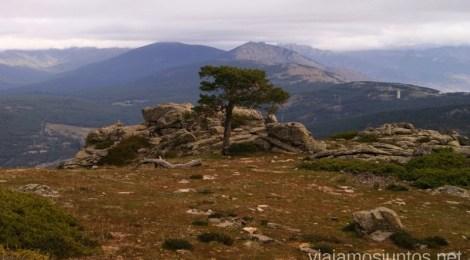Árbol solitario Senderismo por la zona de San Rafael, Madrid Segovia; Ruta de la Cueva Valiente