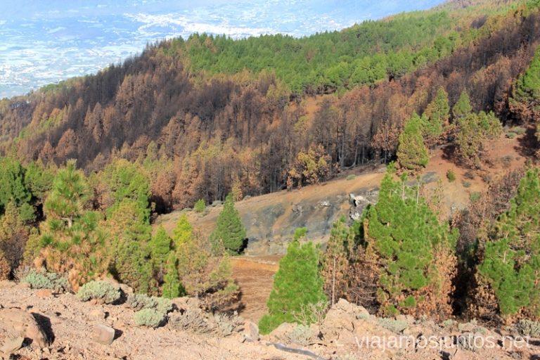 Las marcas del incendio forestal en Fuencaliente en agosto, 2016 Ruta de los Volcanes, en la isla de la Palma, Islas Canarias #LaPalmaJuntos