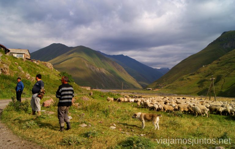 Ovejas en el Valle de Truso Excursión al Valle de Truso, Kazbegi, Stepantsminda, Georgia
