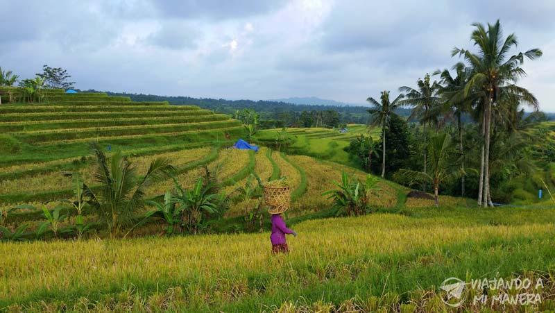 Tegallalang-rice-terraces-01