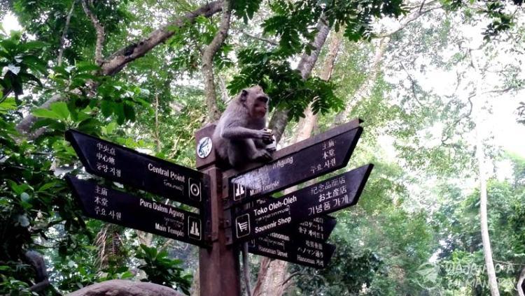 monkey-forest-02
