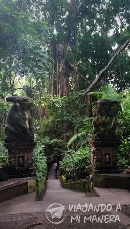 monkey-forest-03