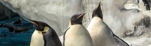 Penguins Up-Close Tour