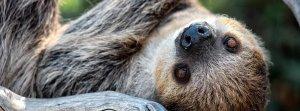 Sloth Encounter Tour