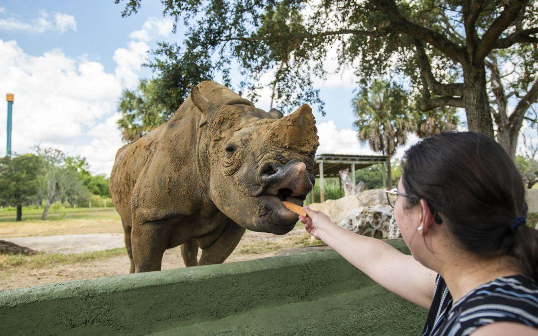 Busch Gardens Tampa Bay tem novos passeios guiados