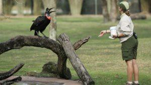Brincadeiras com animais em Magic of Disney's Animal Kingdom