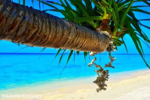 Collar de corales en una palmera muy particular en Gili Air
