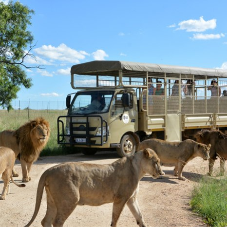 Lion Safari Park